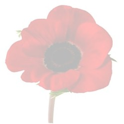 poppy_wash.jpg (6261 bytes)