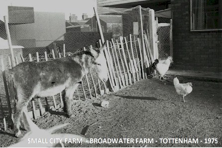 small_city_farm2_broadwater_farm-tottenham_1975.jpg (57662 bytes)