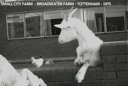 small_city_farm_broadwater_farm_tottenham_1975.jpg (37794 bytes)